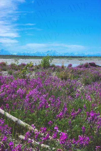 Floodplain Flowers
