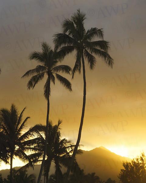 Evening In The Tropics
