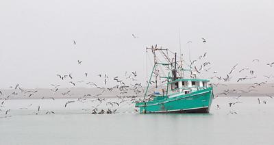 2016-03-27  Shrimp Boat