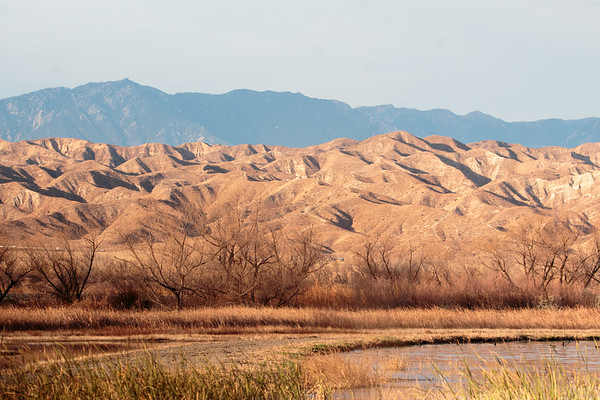 2018-01-14  San Jacinto Wildlife Area, Riverside, California