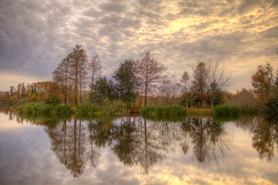 This is Lake Alice on the University of Florida Campus in December.