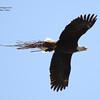 eaglestarlightbay-nevis