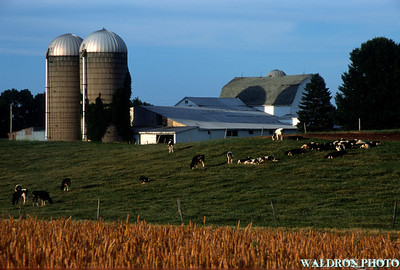 Dairy Farm, Naples New York