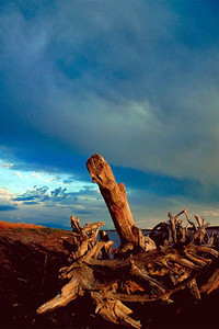 Driftwood, Great Salt Lake Utah