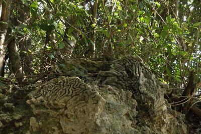 Key Largo Limestone