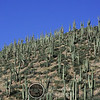 Saguaro Mountain