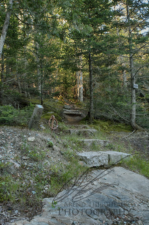 Maine wooded trail