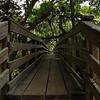 Wodden Suspension bridge