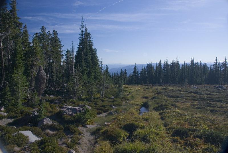 Bunny Meadow, Mt. Shasta