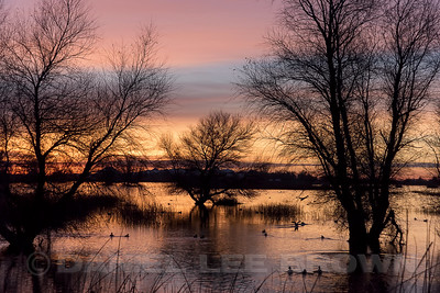 Sunrise at Sacramento NWR