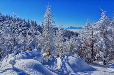 Winterwald | Forest in winter, Pilatus