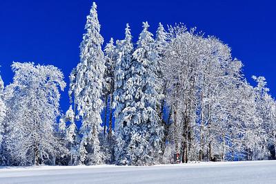 Winterwald | Forest in winter