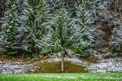 Schnee im Spätherbst