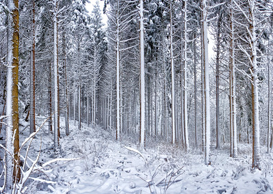 Winterwald | Forest in winter