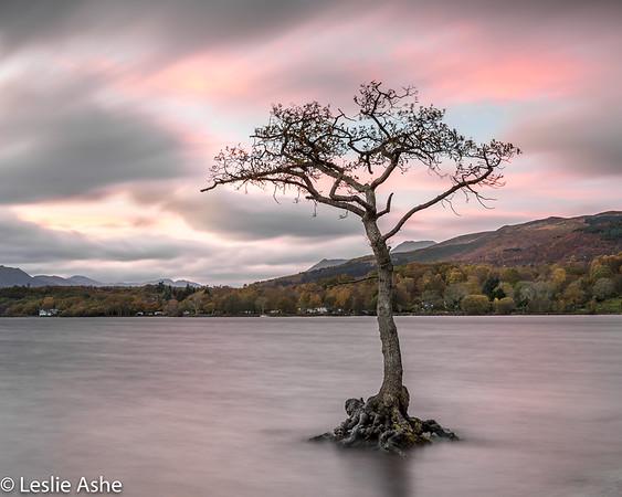 Loch Lomond tree (3)