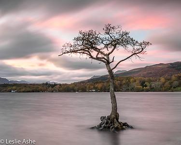 Loch Lomond tree 3/3