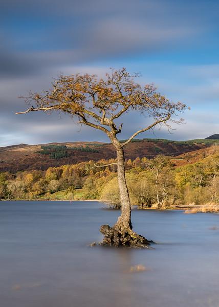 Loch Lomond tree 2/3