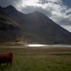 Highland cattle graze at Loch Achnambeithach