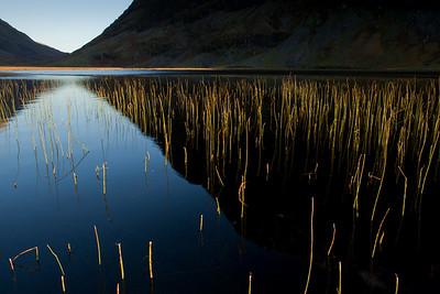 Gold reeds on black