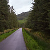 Forests of Mull