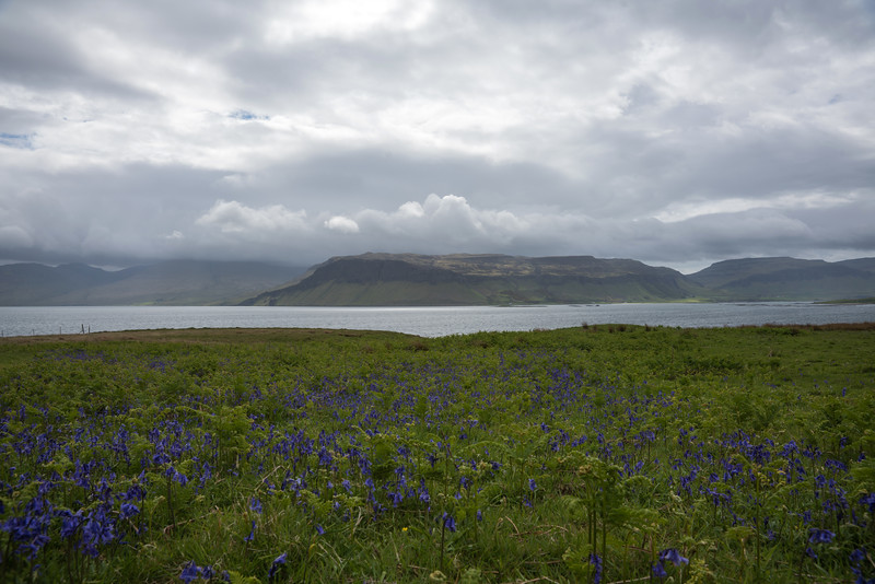 More Bluebells from the Isle of Ulva