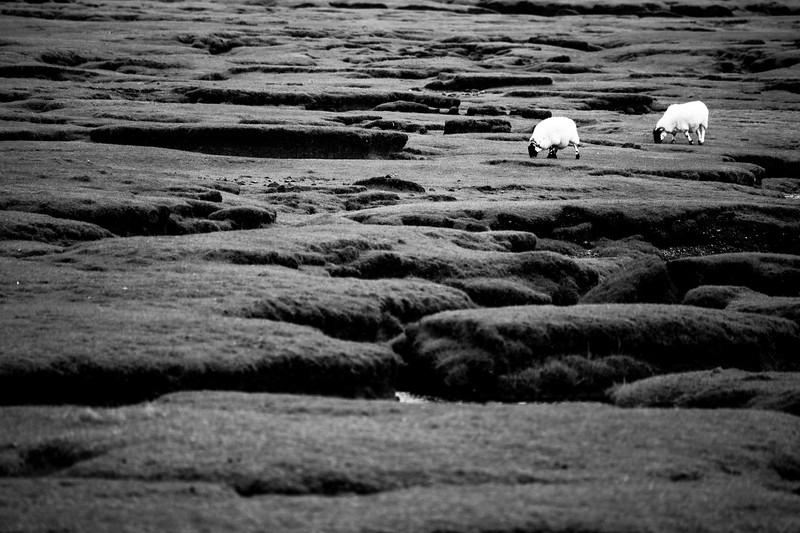Lumpy terrain