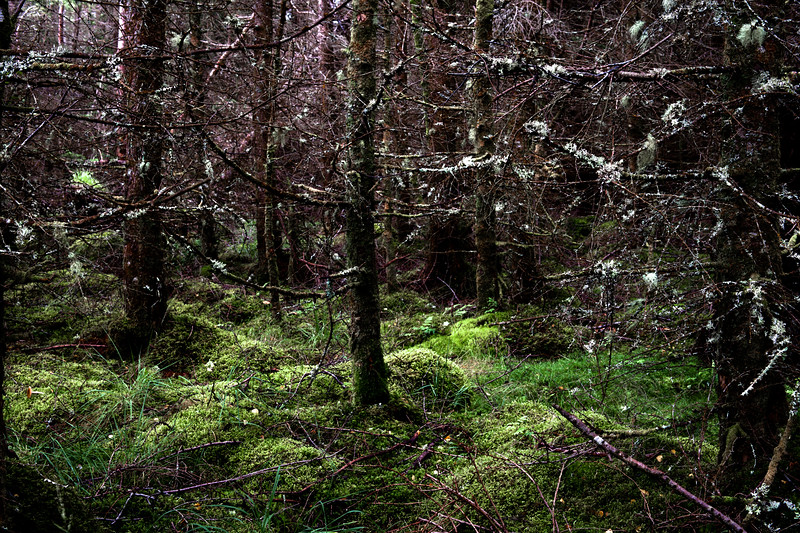Silvery Forestry