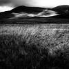Wispering reeds