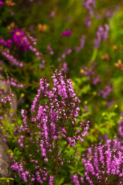 2015-08-25_Scotland_StirlingR_0067