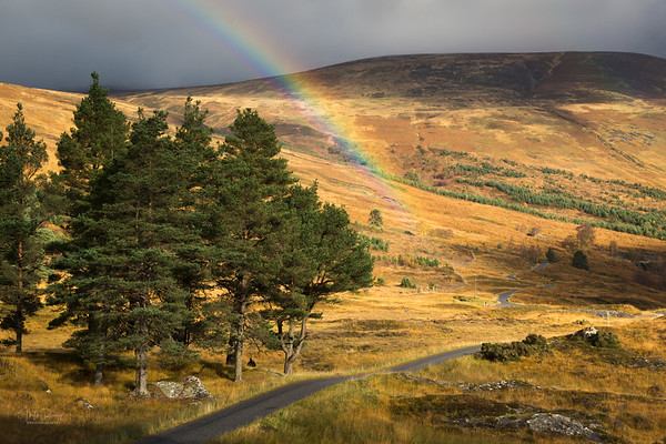 Road to the Pot of Gold