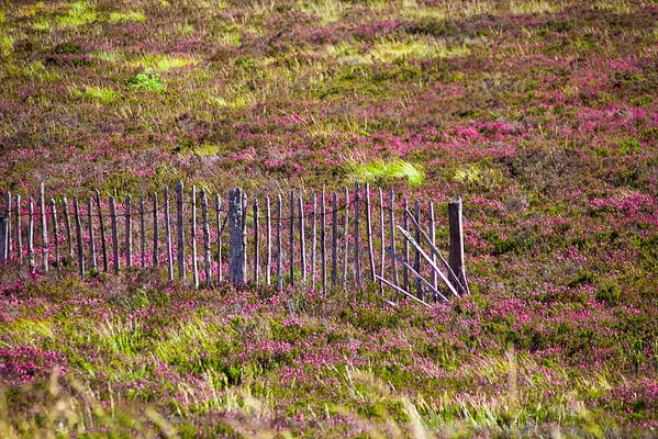 2015-08-30_Scotland_StirlingR_0436