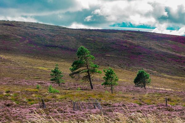 2015-08-30_Scotland_StirlingR_0439