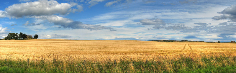 Barley field in Tain. Soon to be scotch.