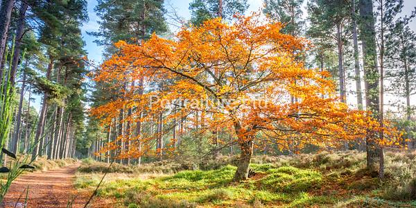 Dalhefour Wood, near Ballater, Aberdeenshire, Scotland