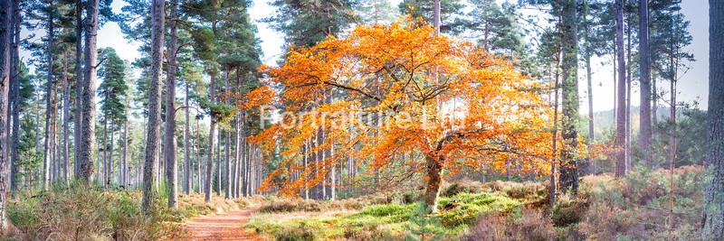 Dalhefour Wood, Ballater, Aberdeenshire, Scotland