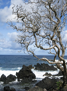 HI 2011 Maui 305