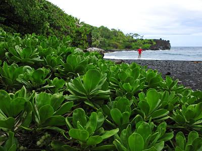 HI 2011 Maui 260