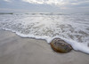 Horseshoe Crab in Surf