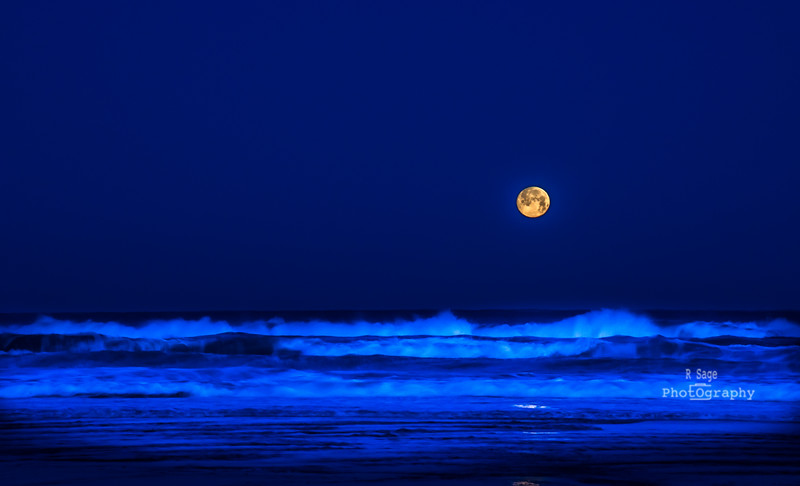 Blue hour moonset-1395