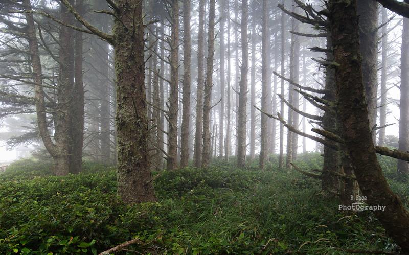 foggy trees-2754
