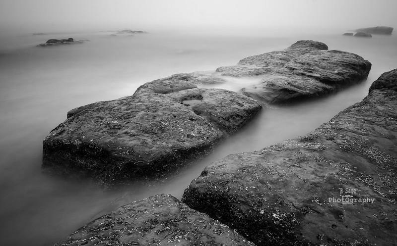 foggy day study b&w-5790