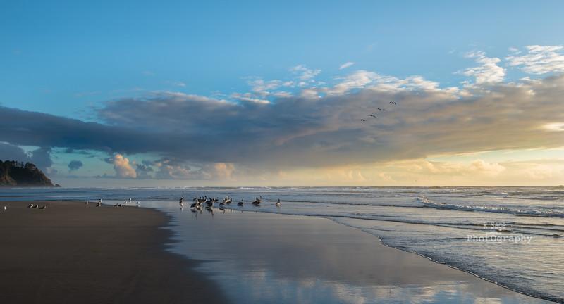 the beach-3810