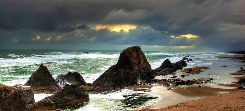 seal rock wi gulls copy