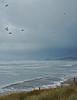 ocean storm birds