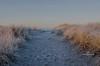 frosty beach path-8437