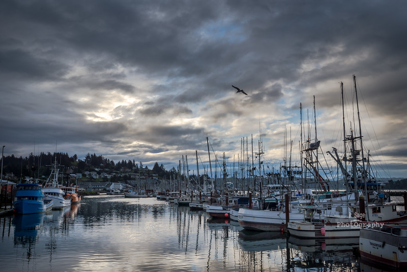 harbor skys-9541