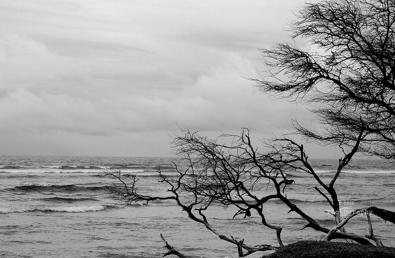 ocean creepy tree