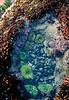 anemones_DSC0090