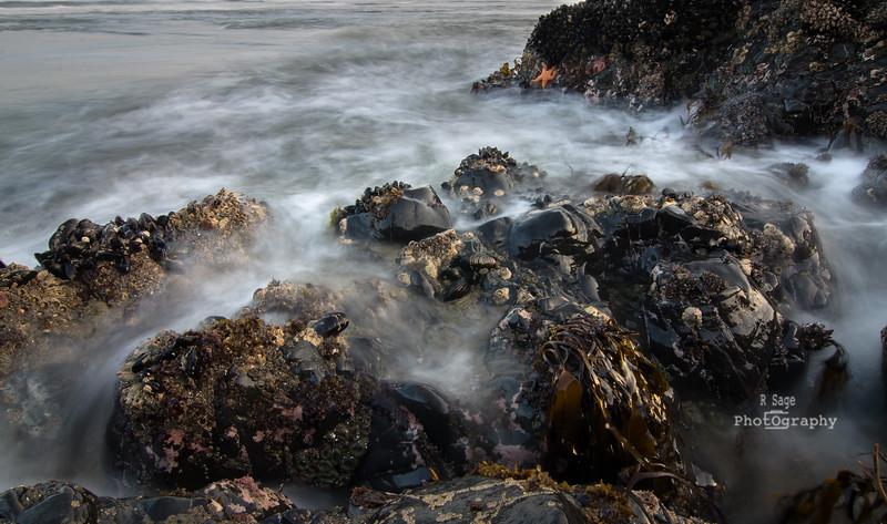 tidepool sea life-1757