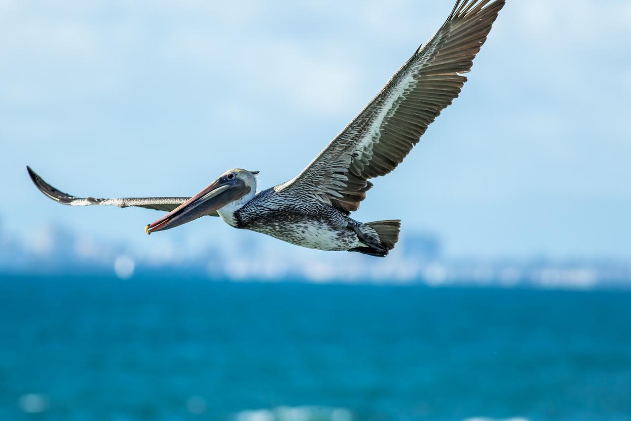 Surfing, Birds